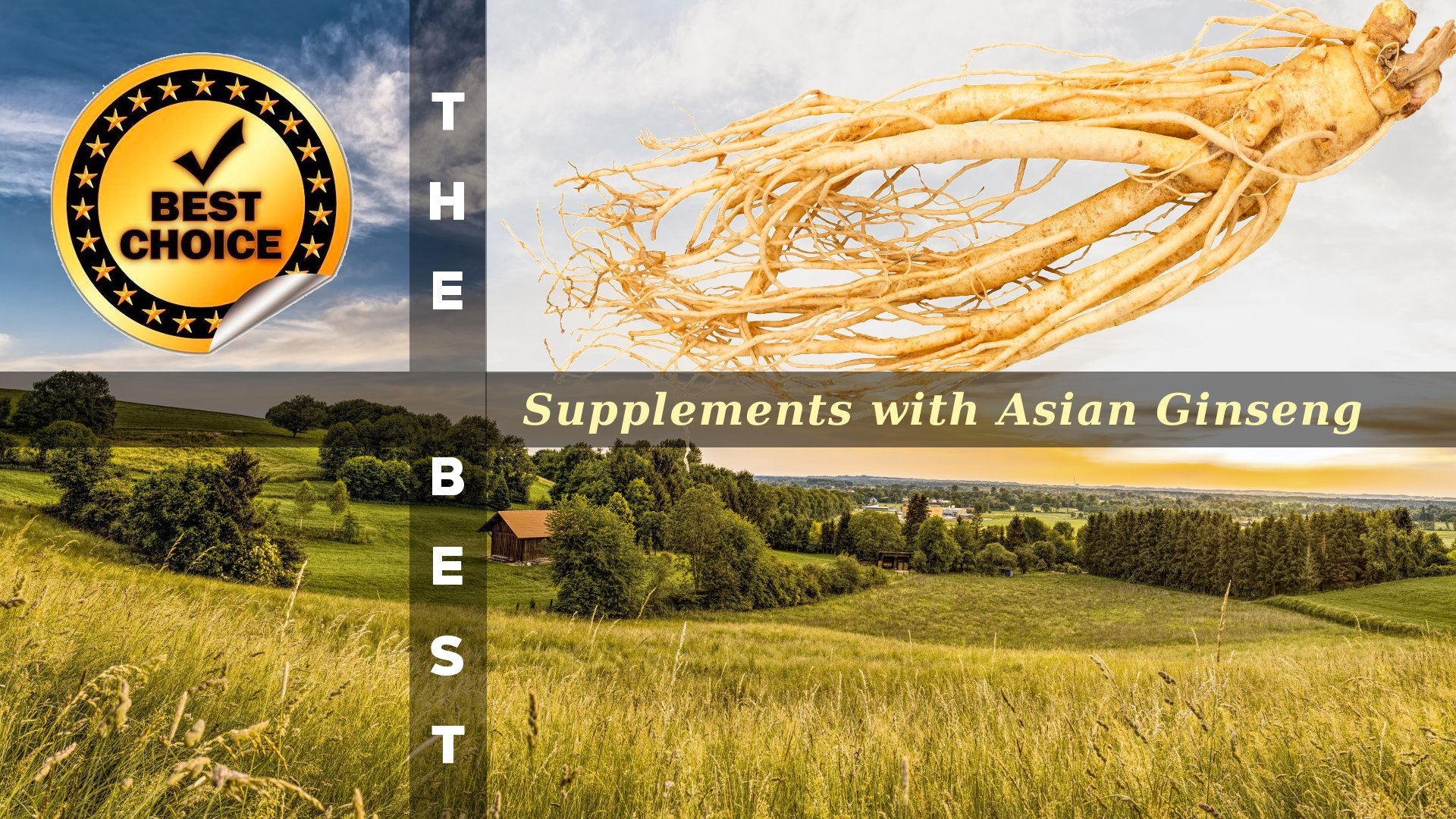 The Supplements with Asian Ginseng