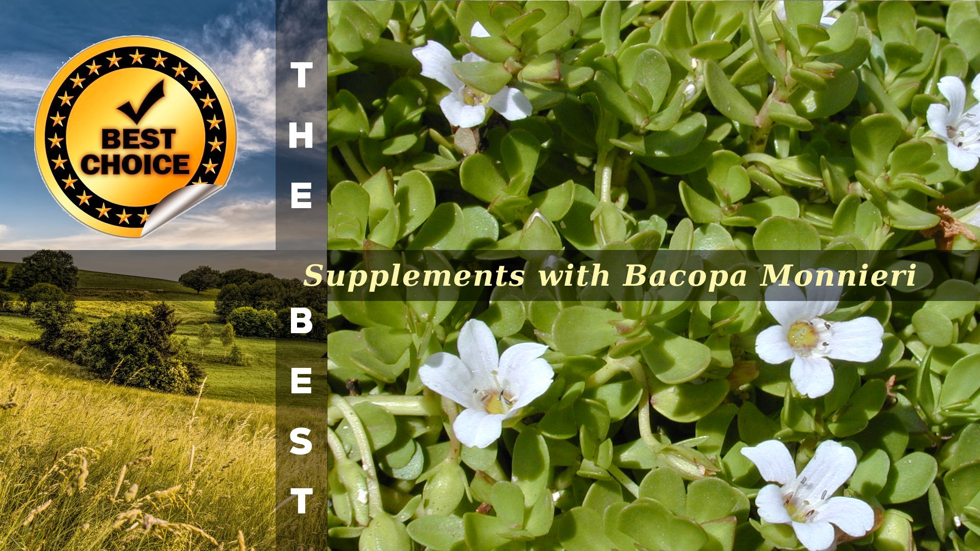 The Supplements with Bacopa Monnieri