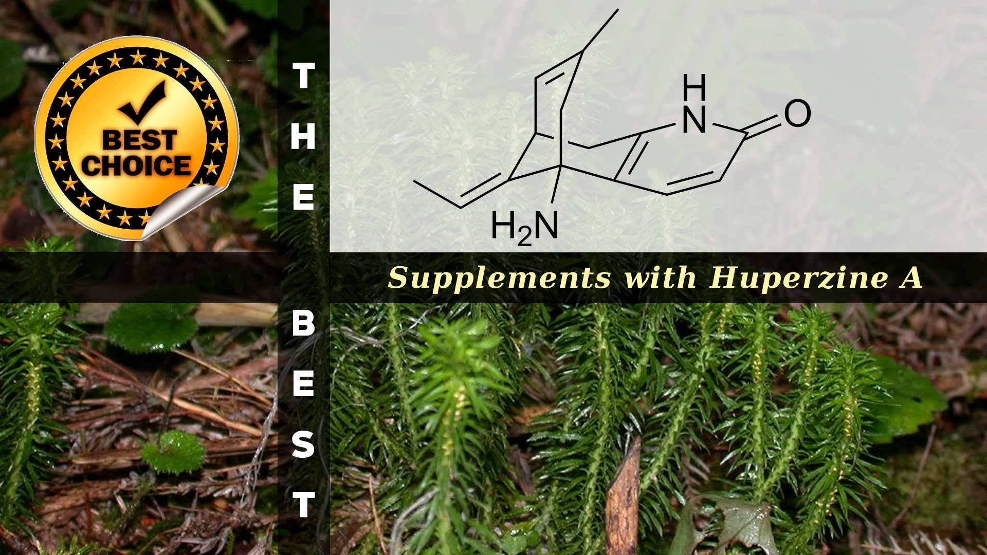 The Supplements with Huperzine A