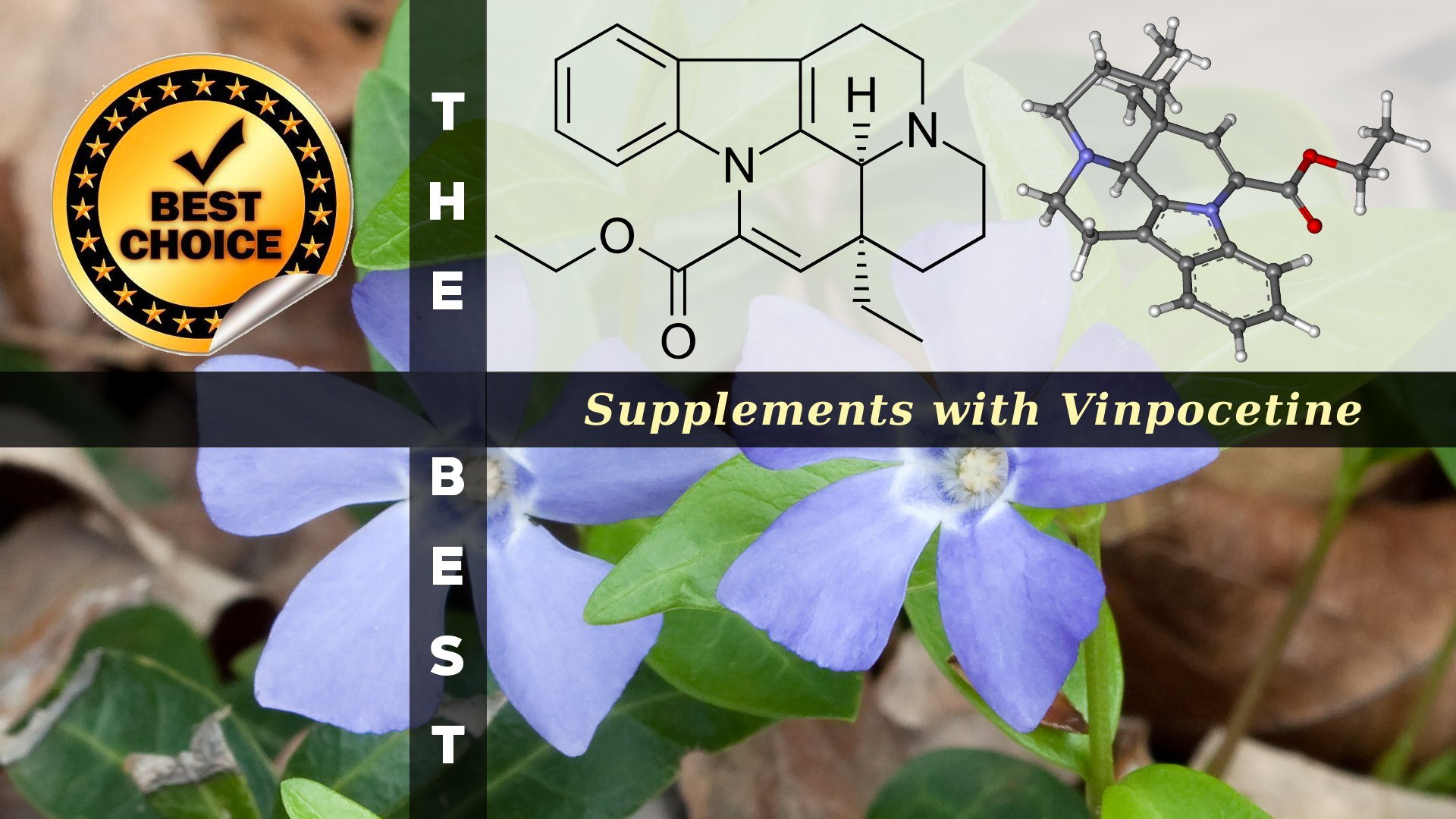 The Supplements with Vinpocetine