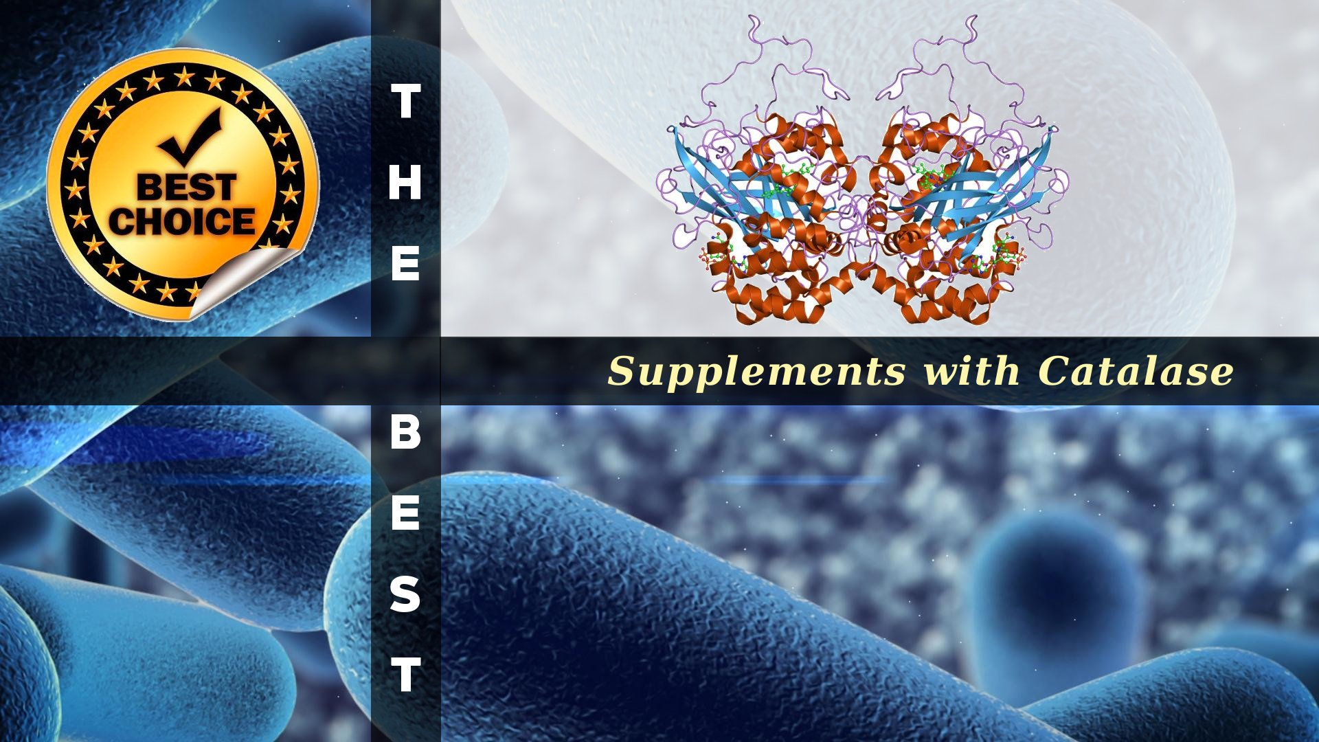The Supplements with Catalase